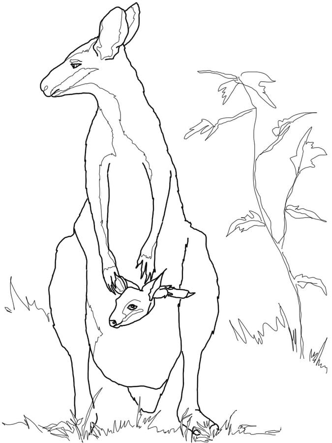 Coloring pages Coloring pages Wallaby printable for