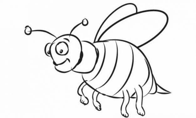 Ausmalbilder Insekten Zum Ausdrucken Kostenlos Für Kinder Und