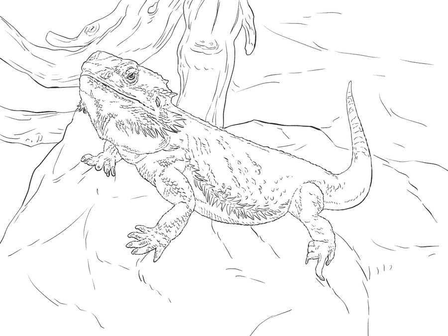 Coloring Pages Water Dragon Printable For Kids Amp Adults
