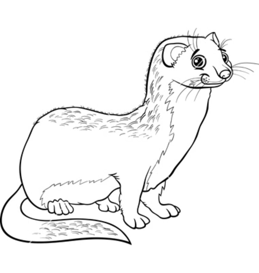 coloring pages coloring pages weasels printable for