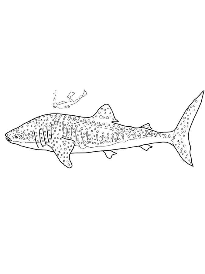 Dibujos para colorear tiburones ballena imprimible - Coloriage de requin a imprimer ...
