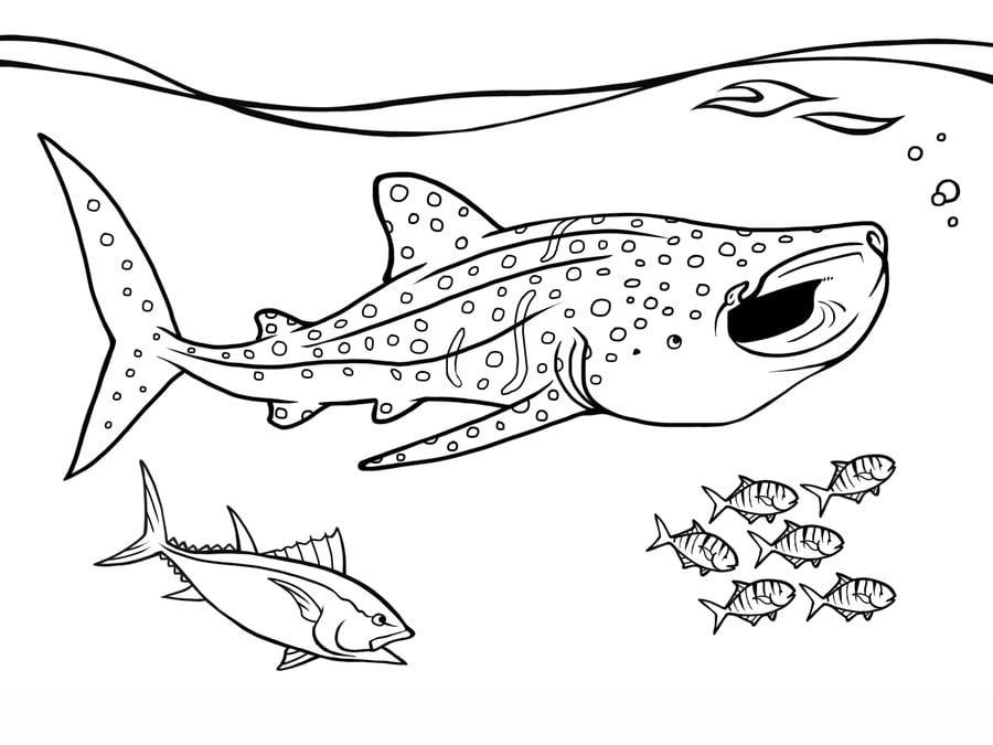 disegni da colorare squali balena stampabile gratuito