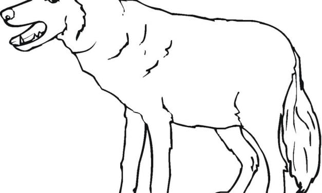 Coloring pages: Wolf