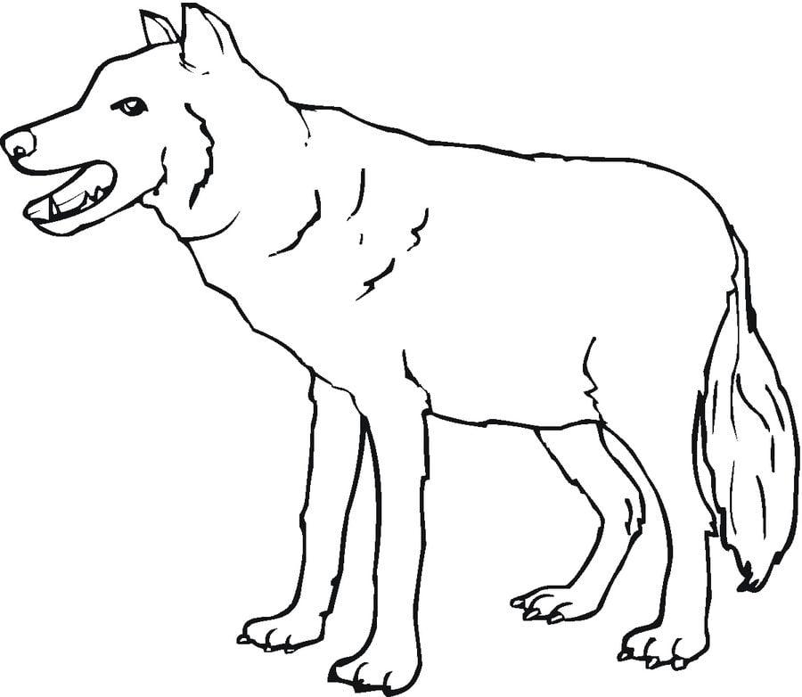 disegni da colorare lupi stampabile gratuito per