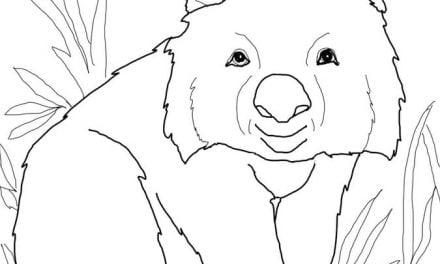 Kolorowanki: Wombat