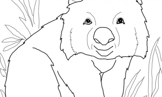Coloring pages: Wombat