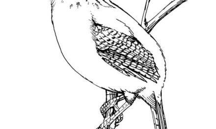 Strzyżyk