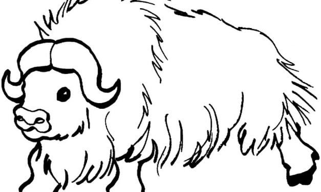 Coloring pages: Yak