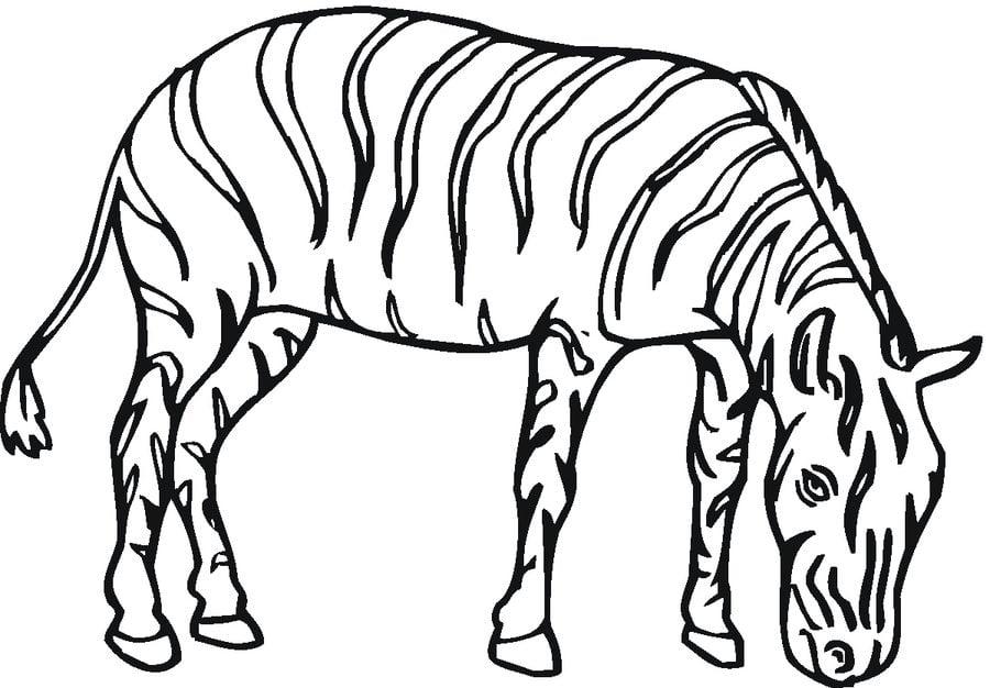 Dibujos para colorear: Cebras imprimible, gratis, para los niños y ...