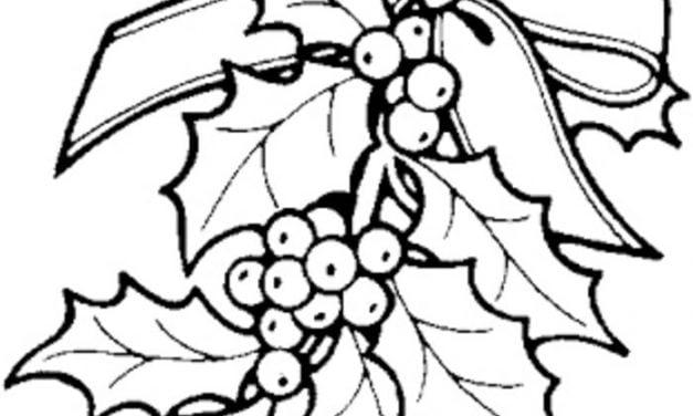 Coloring pages: Mistletoe