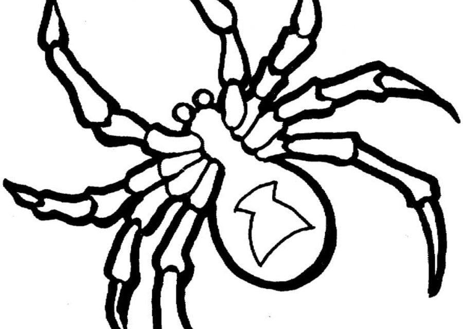 Ausmalbilder: Vogelspinnen