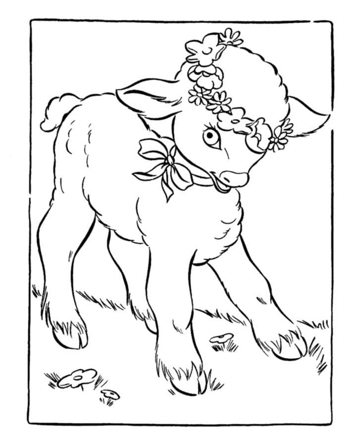 Dibujos para colorear: Cordero de Pascua imprimible, gratis, para ...