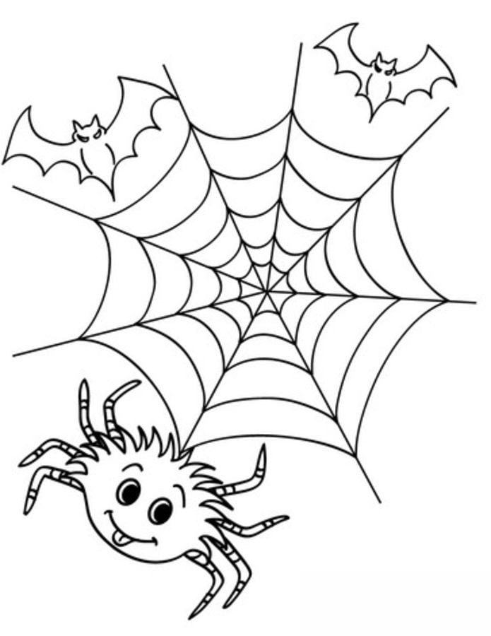 Types of Spiders Coloring Pages - In All You Do | 900x695