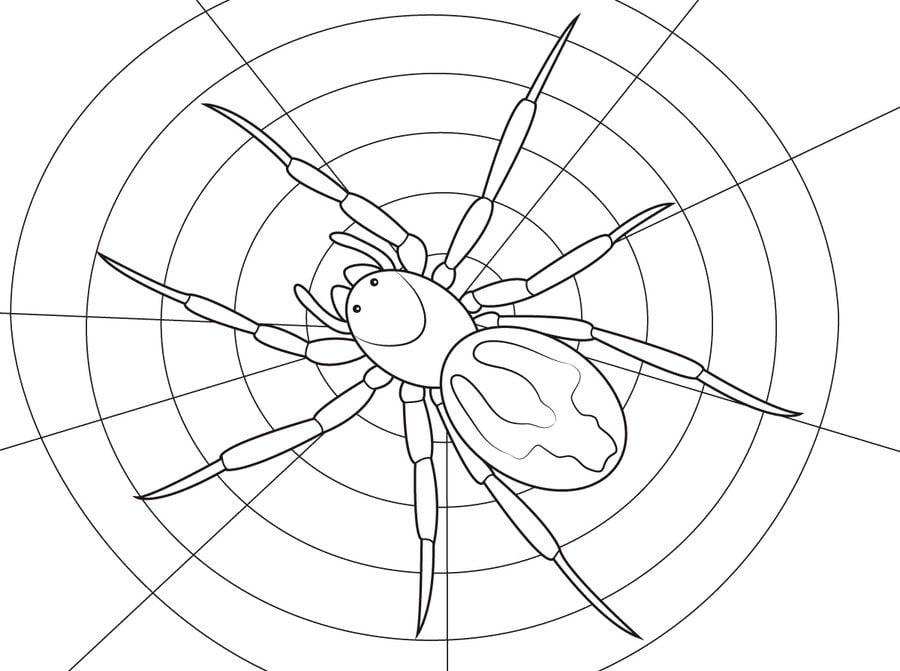 Ausmalbilder Spinnen Zum Ausdrucken Kostenlos F 252 R