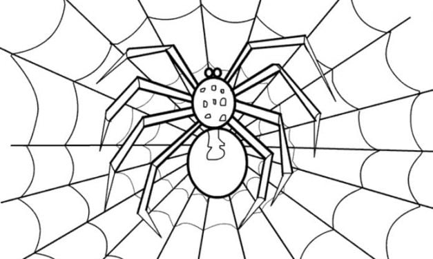 Coloring pages: Spiders