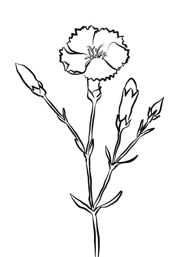 Kolorowanki kolorowanki go dzik do druku dla dzieci i for Plantas ornamentales para colorear