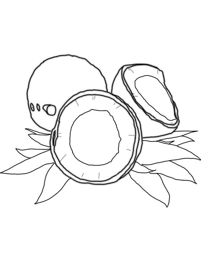 Ausmalbilder: Kokospalme zum ausdrucken, kostenlos, für Kinder und ...