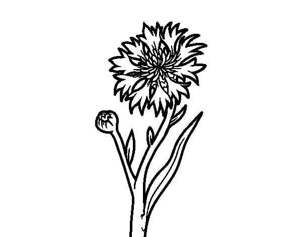 Disegni da colorare disegni da colorare fiordaliso stampabile gratuito per bambini e adulti - Coloriage fleur bleuet ...