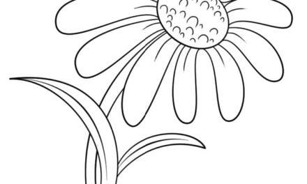 Ausmalbilder: Gänseblümchen