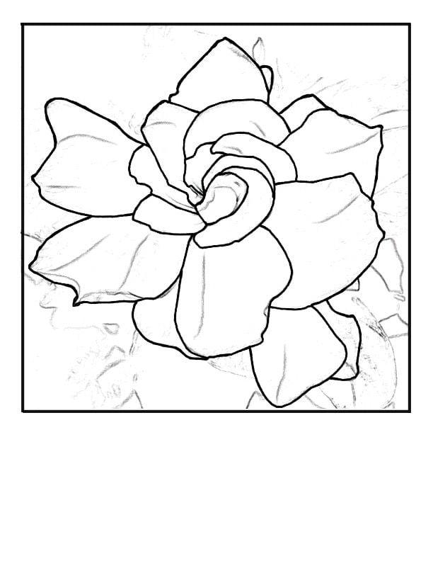 Dibujos para colorear: Gardenia imprimible, gratis, para los niños y ...