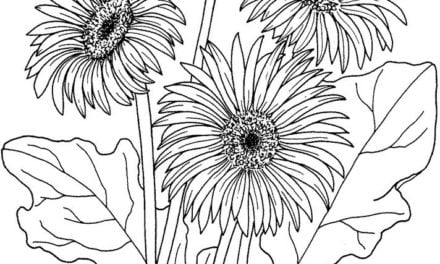 Coloring pages: Gerbera