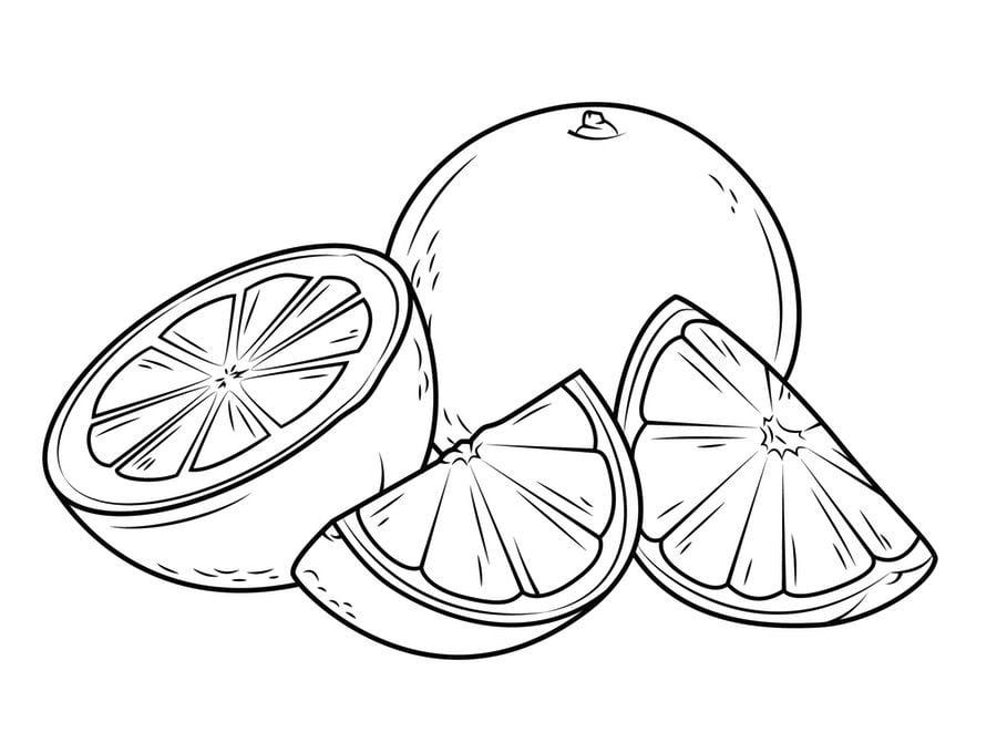 dibujos para colorear   u00c1rbol del pomelo imprimible  gratis