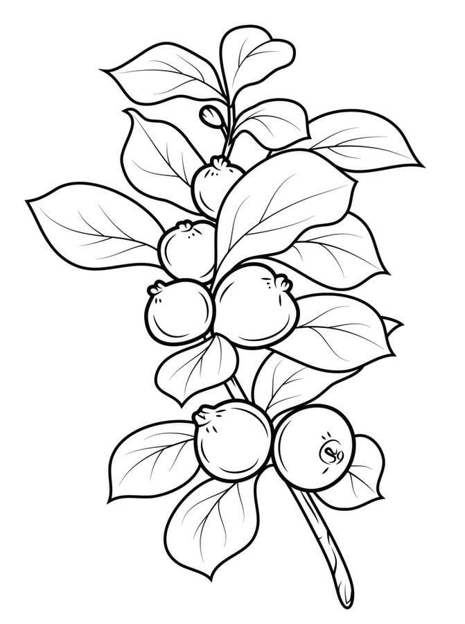 Dibujos para colorear: Guayaba imprimible, gratis, para ...