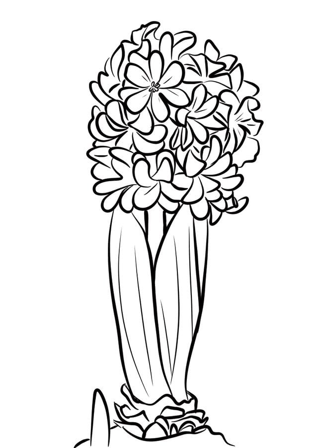 coloring pages coloring pages hyacinth printable for