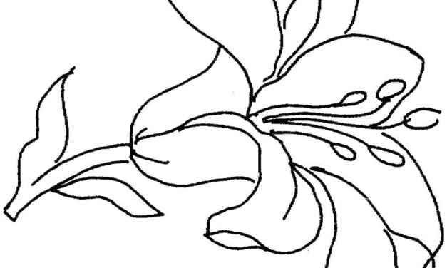 Coloring pages: Lilies