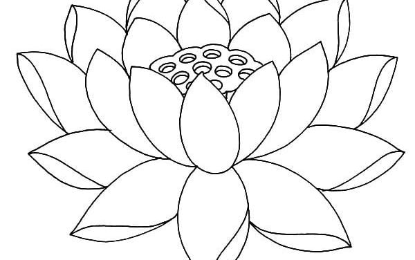 Coloring pages: Lotus