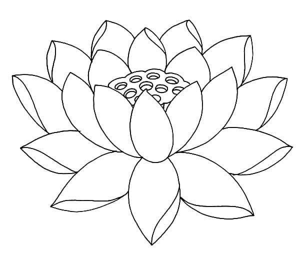 Disegni da colorare fior di loto stampabile gratuito for Lotus flower coloring pages free