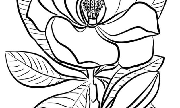 Coloring pages: Magnolia