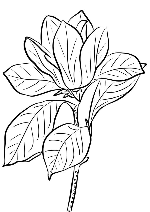 Disegni da colorare magnolia