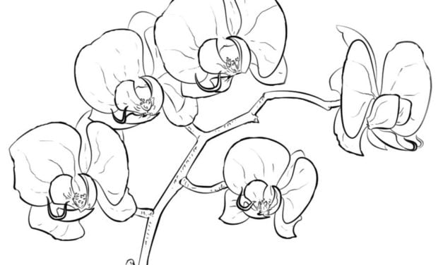 Coloring pages: Orchid