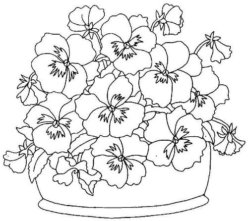 Ausmalbilder: Gartenstiefmütterchen zum ausdrucken, kostenlos, für ...