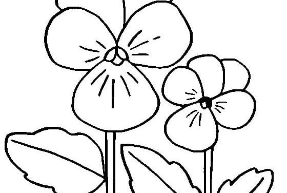 Coloring pages: Pansy