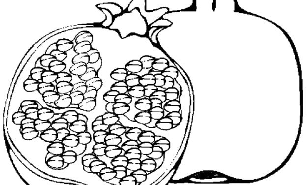 Coloring pages: Pomegranate