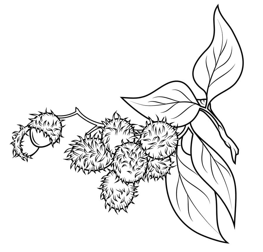 Coloring pages Coloring pages Rambutan printable for