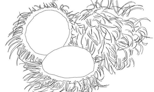 Coloring pages: Rambutan