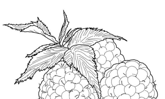 Coloring pages: Raspberry