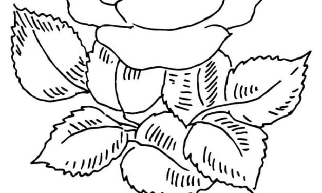 Coloring pages: Rose