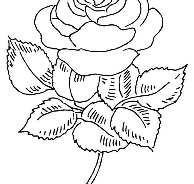Roses and Hearts Coloring Pages - Best Coloring Pages For Kids | 640x675