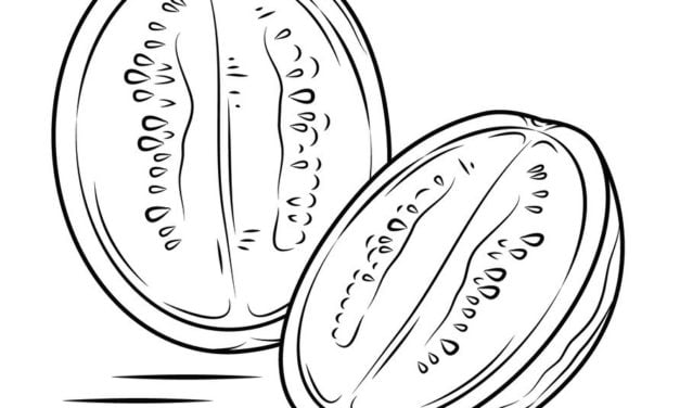 Coloring pages: Watermelon