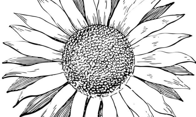 Coloring pages: Sunflowers