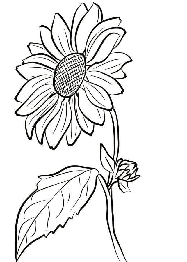 Disegni da colorare girasole stampabile gratuito per for Disegni da colorare per adulti e ragazzi