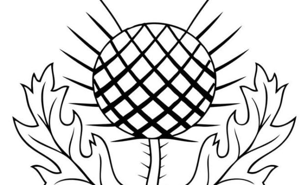 Coloring pages: Thistle