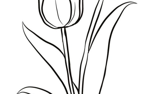Coloring pages: Tulip