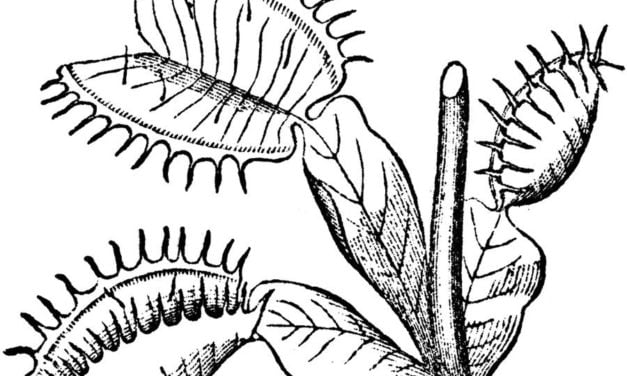 Coloring pages: Venus flytrap