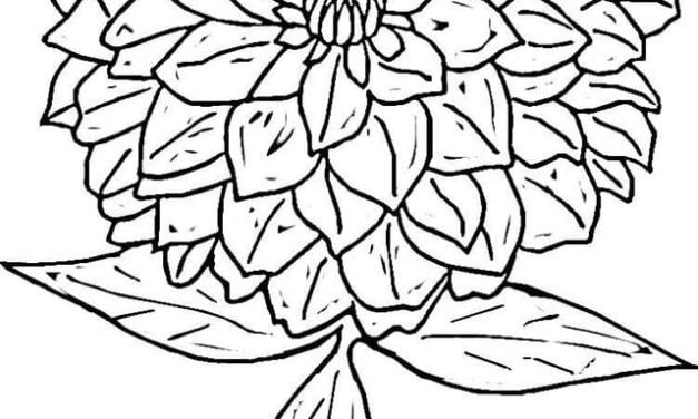 Coloring pages: Zinnia