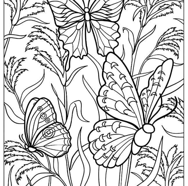 ausmalbilder für erwachsene insekten zum ausdrucken